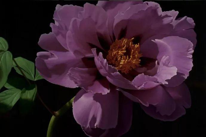 花卉绘画 美国女画家Nancy Depew作品欣赏插图27