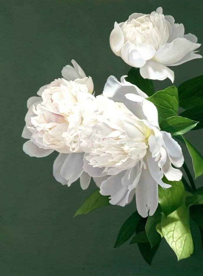 花卉绘画 美国女画家Nancy Depew作品欣赏插图29