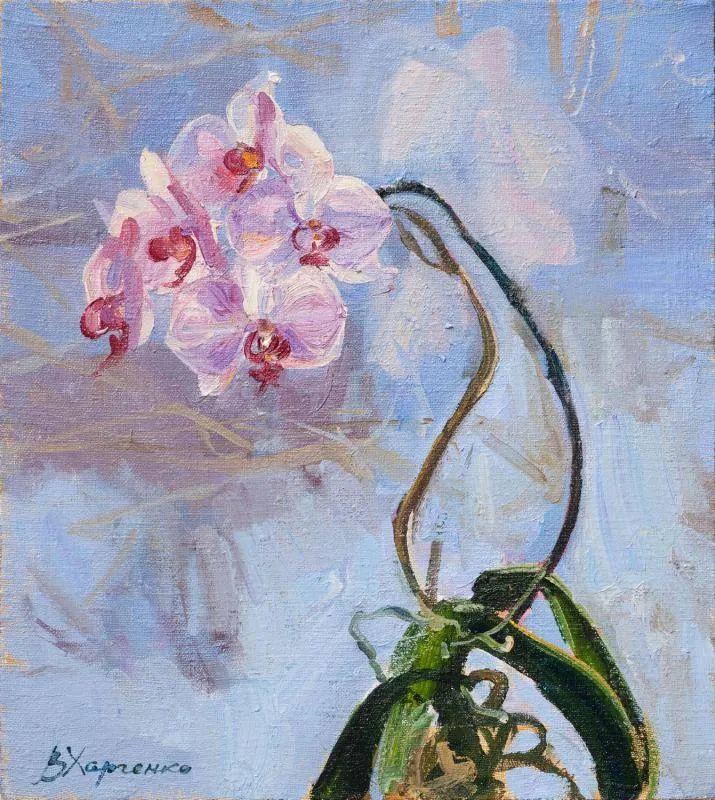 她的花儿总带着阳光,让人看了心都敞亮了!插图128