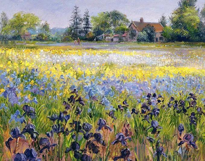 盛开的花园景色,色彩斑斓的风景!插图9