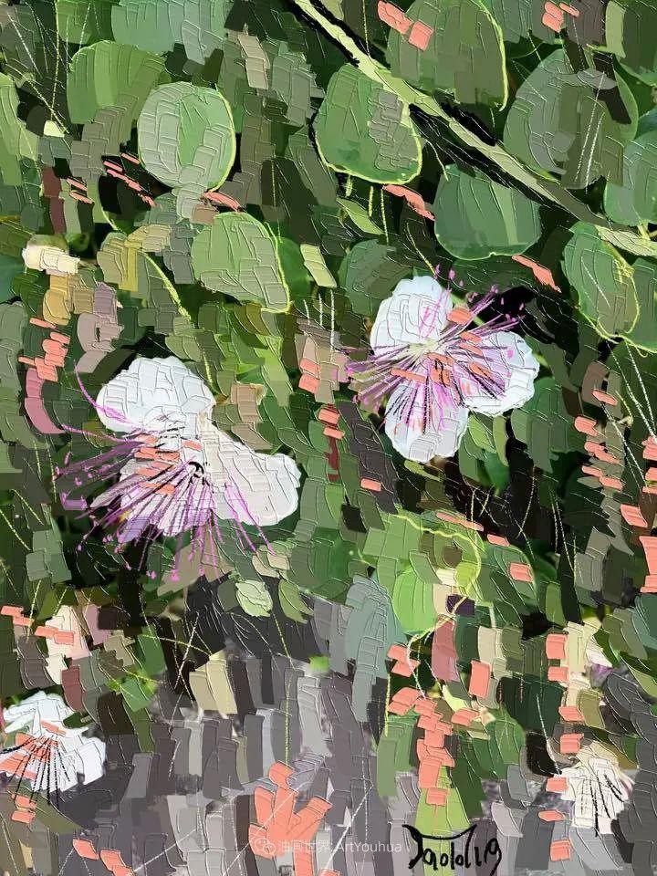 独特的笔触,别样的花卉,美!插图7