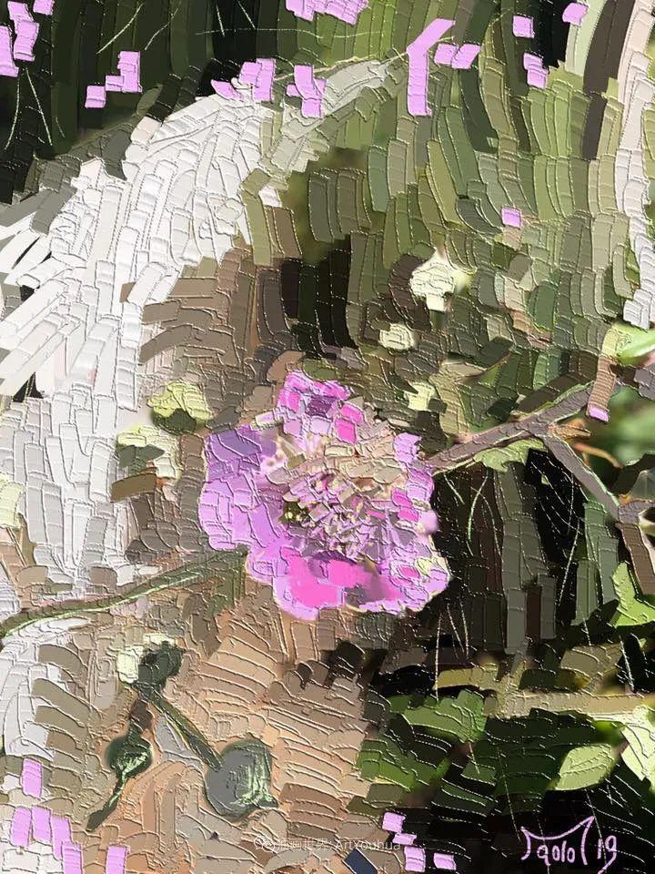 独特的笔触,别样的花卉,美!插图28