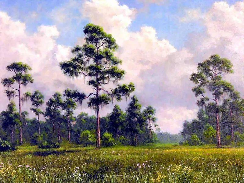 他自学成才,被称为是佛罗里达州画家的院长插图95