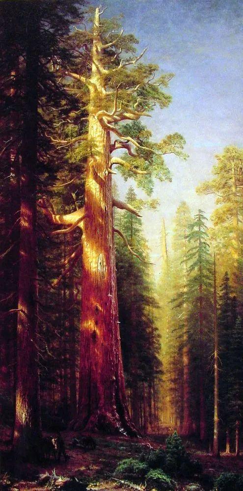 浪漫的光色,迷人的自然风光,强大视觉冲击力插图129
