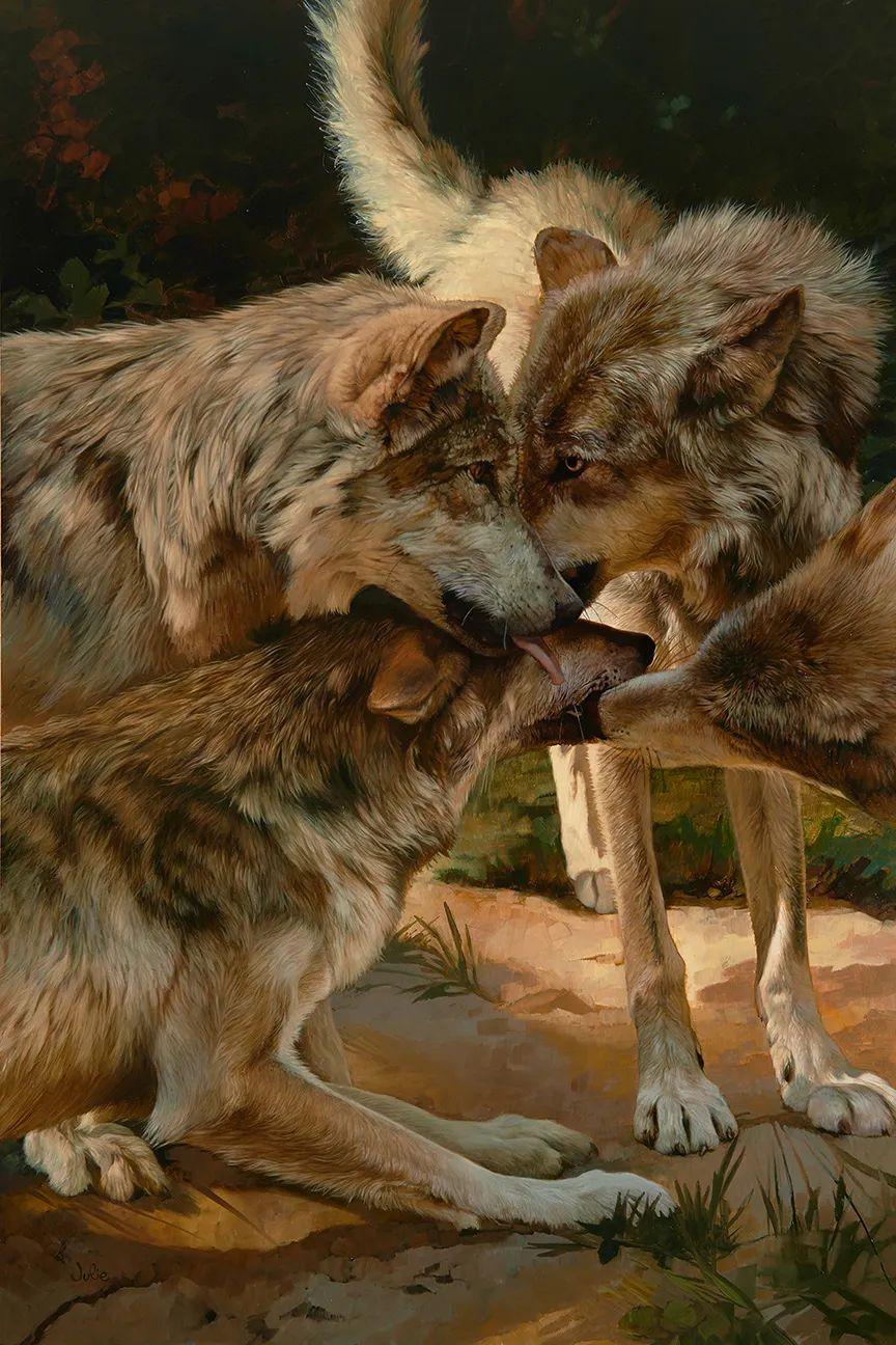 朱莉·贝尔笔下的狼插图5