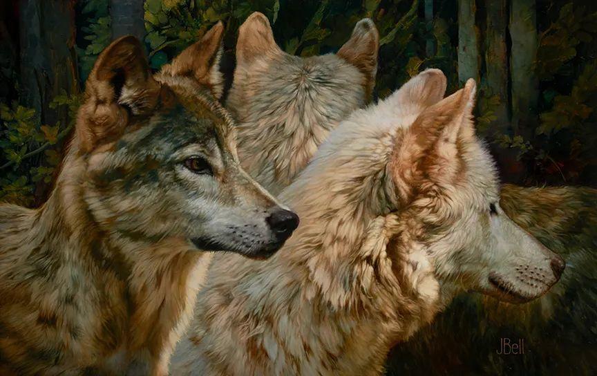 朱莉·贝尔笔下的狼插图15