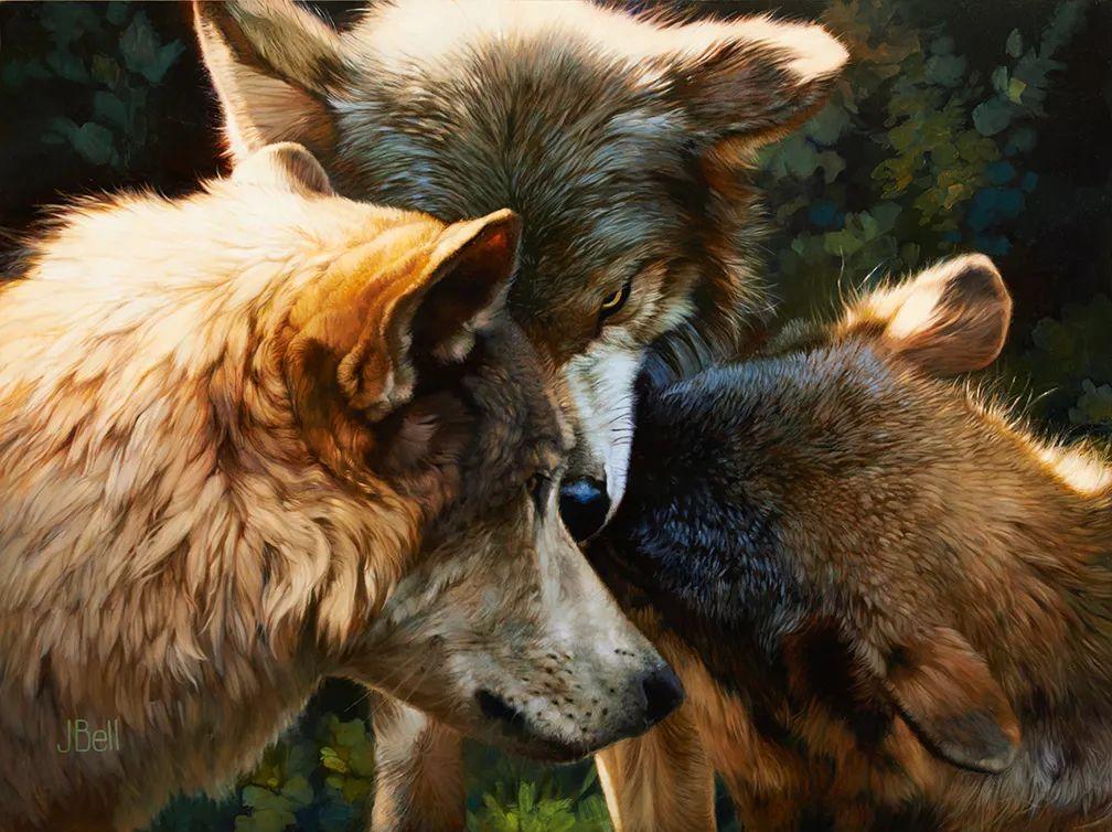 朱莉·贝尔笔下的狼插图17