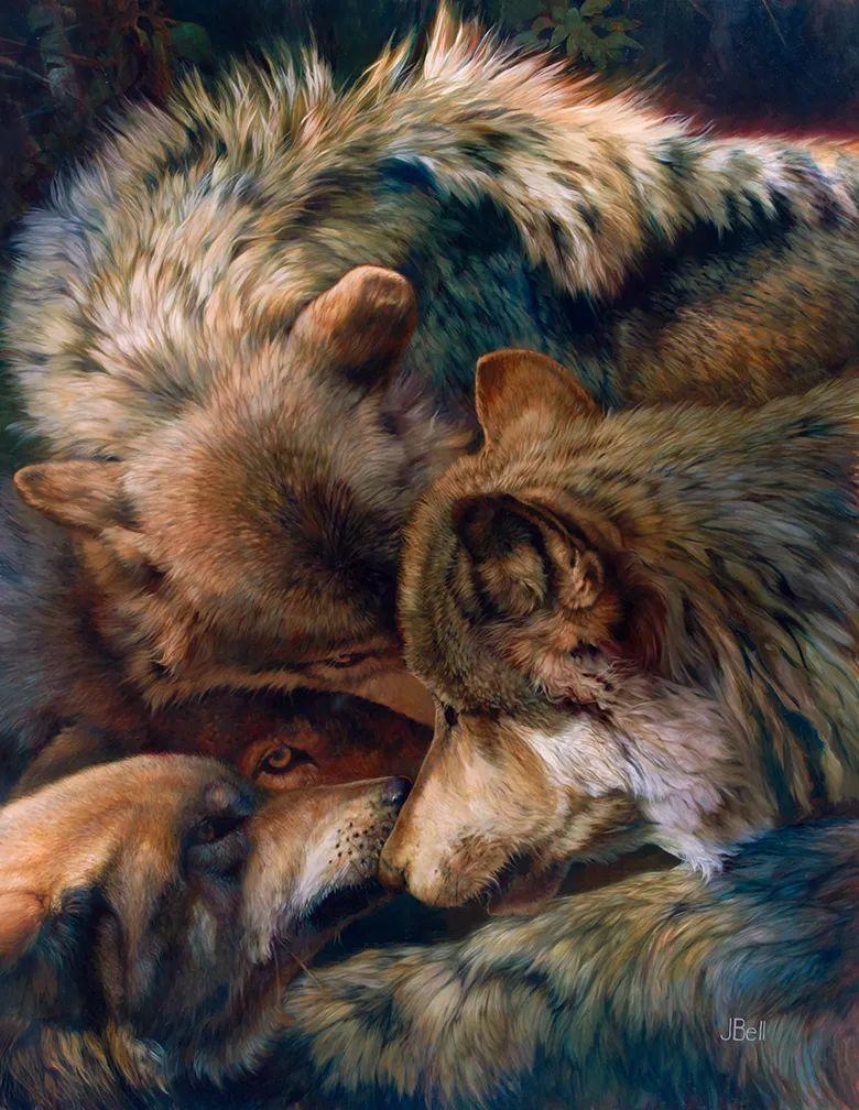 朱莉·贝尔笔下的狼插图19