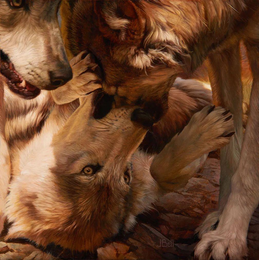 朱莉·贝尔笔下的狼插图21
