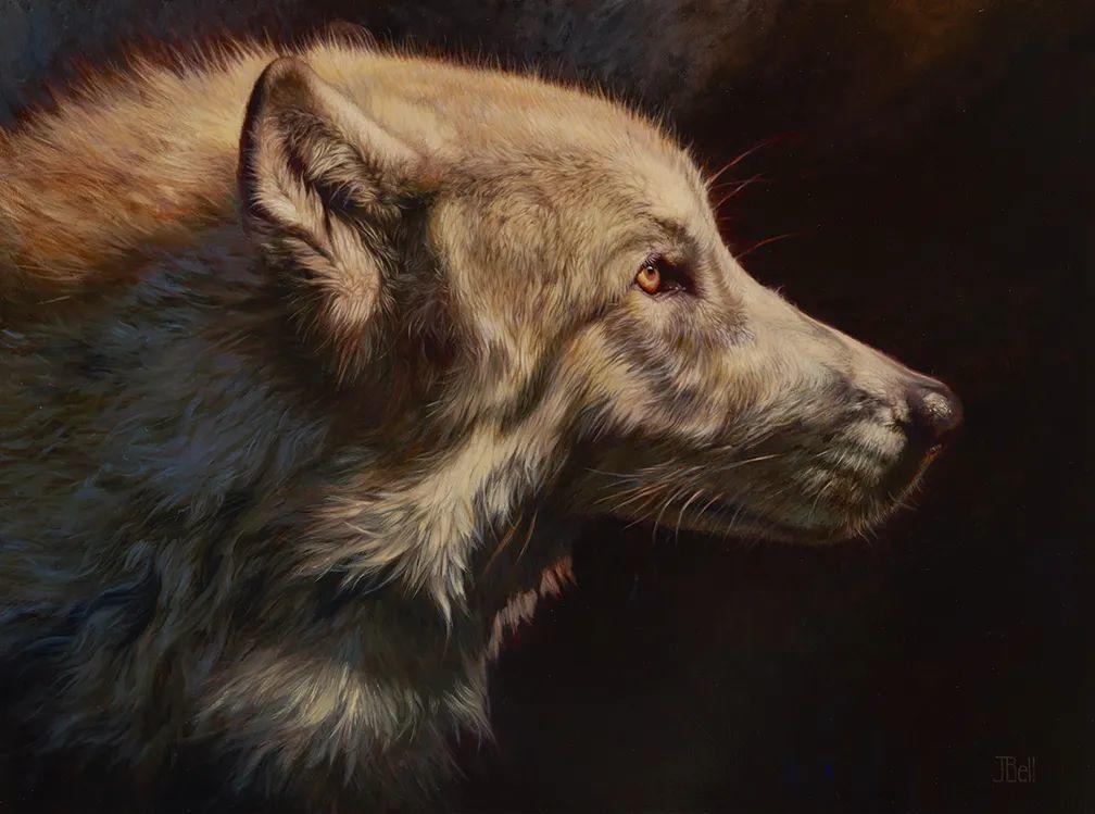 朱莉·贝尔笔下的狼插图25