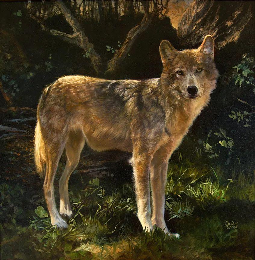 朱莉·贝尔笔下的狼插图35