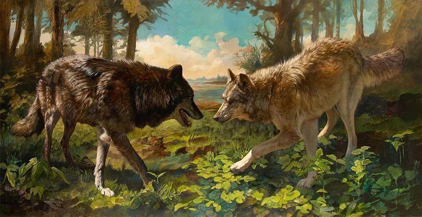 朱莉·贝尔笔下的狼插图37