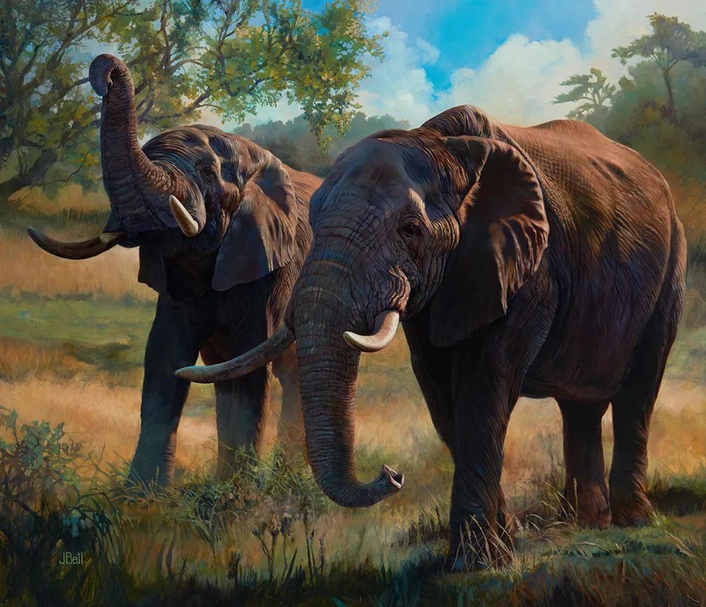 朱莉·贝尔笔下的虎、狮、大象等插图37