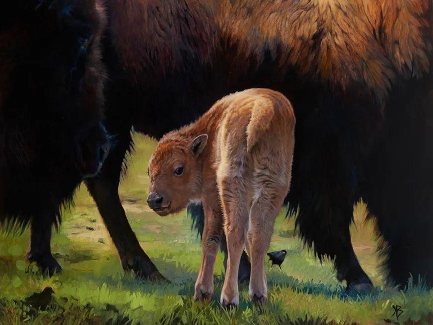 朱莉·贝尔笔下的虎、狮、大象等插图67
