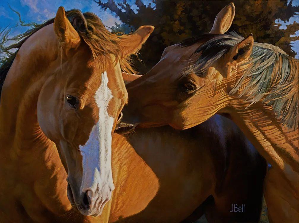 朱莉·贝尔笔下的马插图19