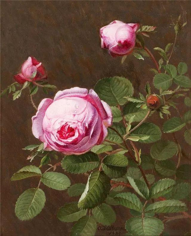 一两百年前的静物花卉作品插图23