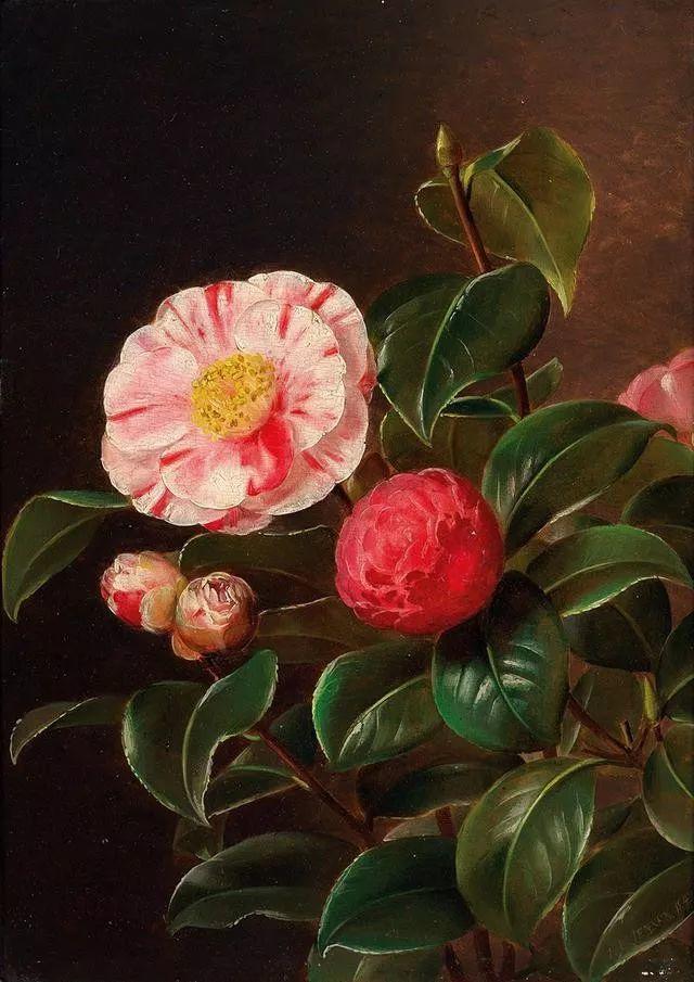 一两百年前的静物花卉作品插图95