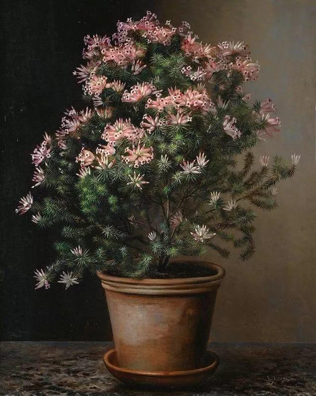 一两百年前的静物花卉作品插图99
