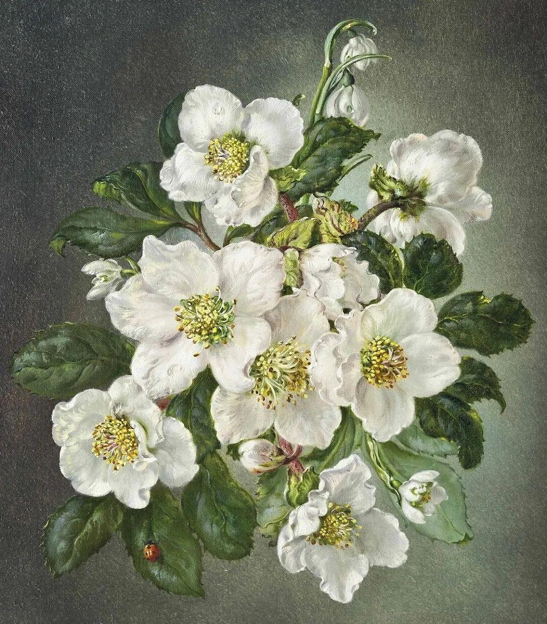 英国最伟大的花卉画家之一,艺术家塞西尔·肯尼迪插图15