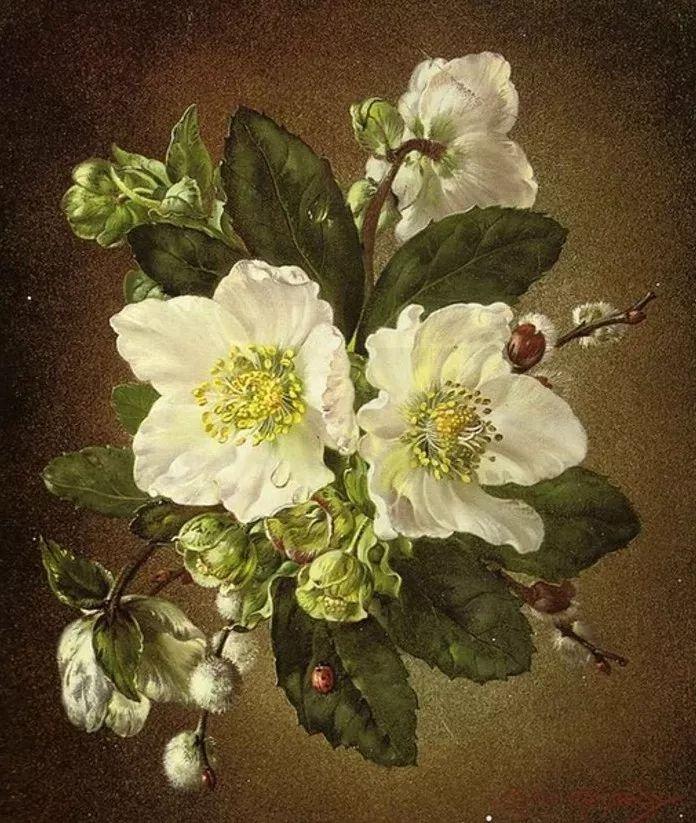 英国最伟大的花卉画家之一,艺术家塞西尔·肯尼迪插图53