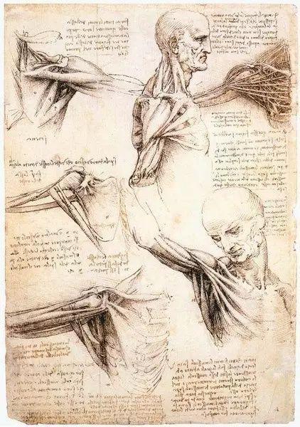 达芬奇的珍贵手稿,你都见过吗?插图93