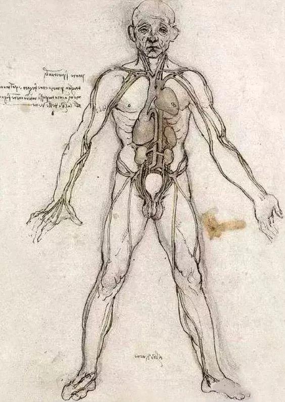 达芬奇的珍贵手稿,你都见过吗?插图167