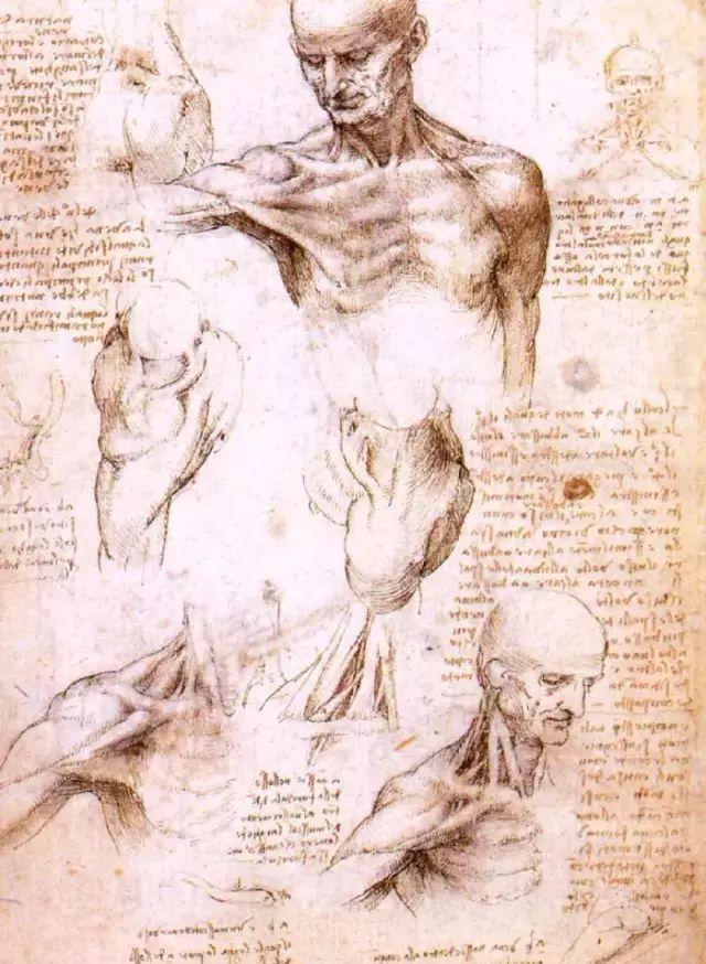 达芬奇的珍贵手稿,你都见过吗?插图173