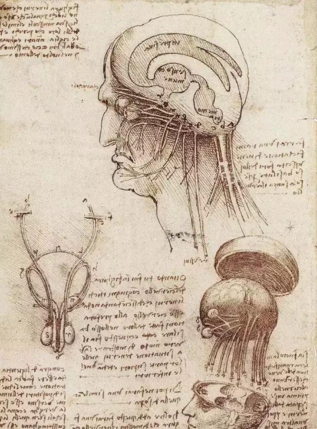 达芬奇的珍贵手稿,你都见过吗?插图201