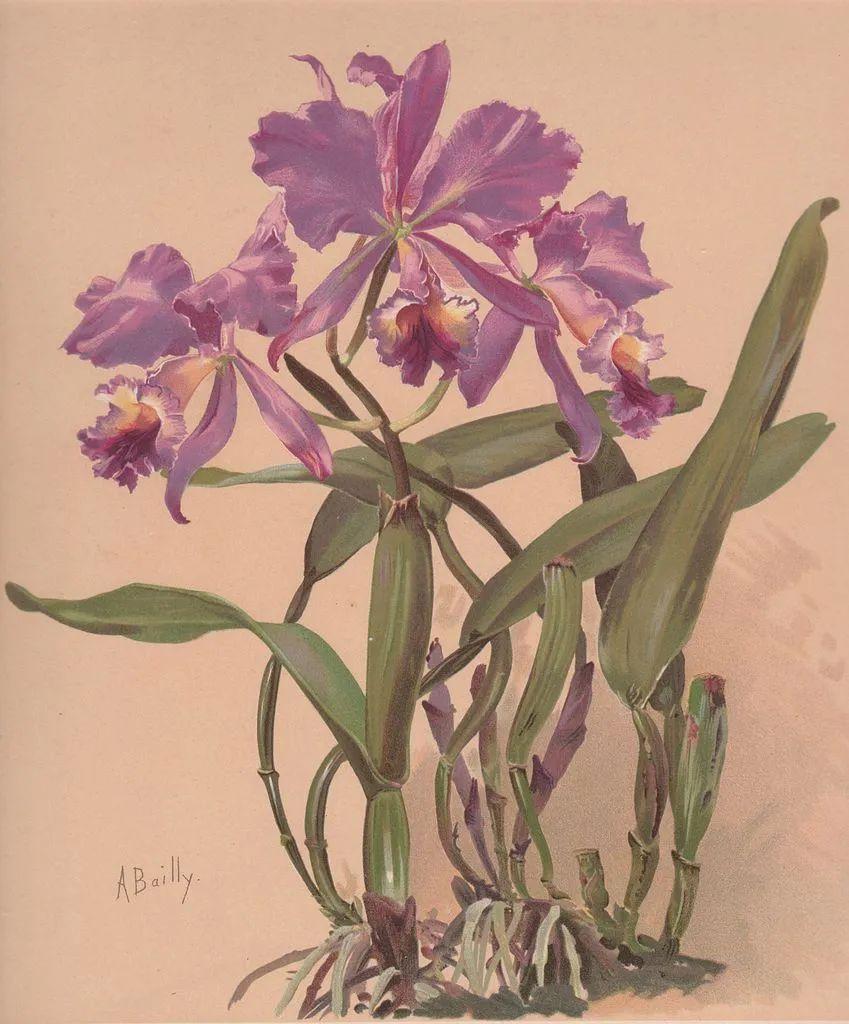 强烈的色彩和粗犷的线条,瑞士先锋派女画家艾丽丝·贝利!插图79
