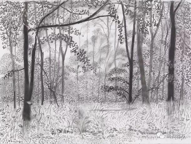 回归素描的美感——大卫·霍克尼素描风景作品插图59