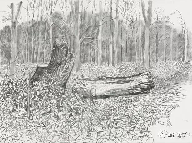 回归素描的美感——大卫·霍克尼素描风景作品插图65