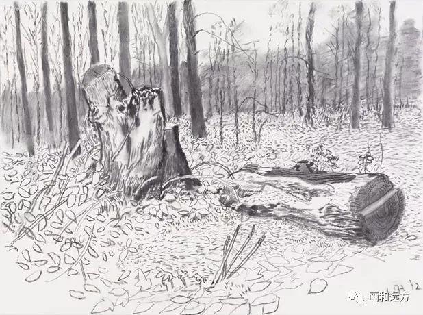 回归素描的美感——大卫·霍克尼素描风景作品插图69