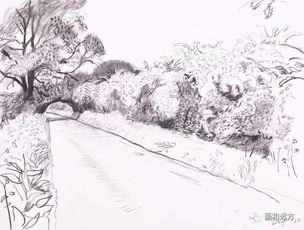 回归素描的美感——大卫·霍克尼素描风景作品插图85