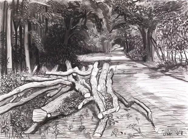回归素描的美感——大卫·霍克尼素描风景作品插图89