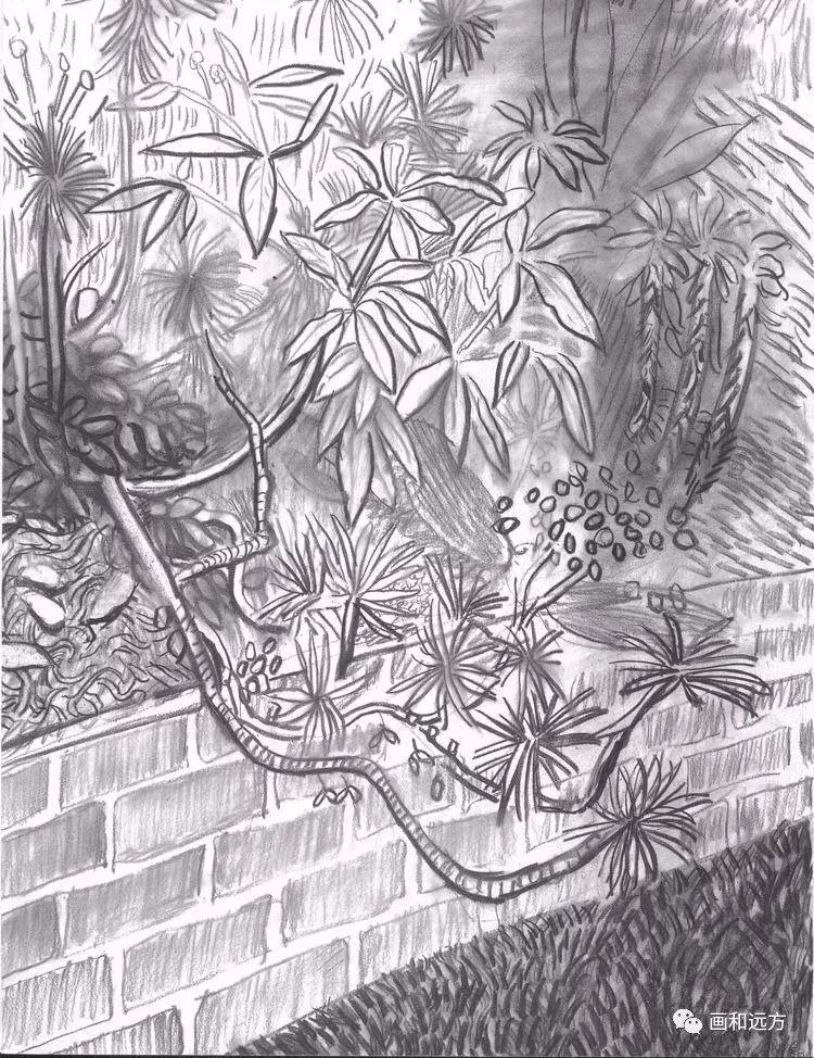 回归素描的美感——大卫·霍克尼素描风景作品插图103
